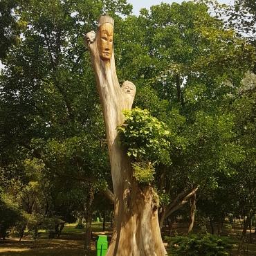 Un arbre heureux