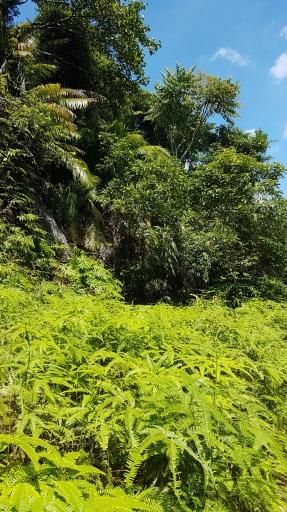 Végétation sans filtre ni retouche...