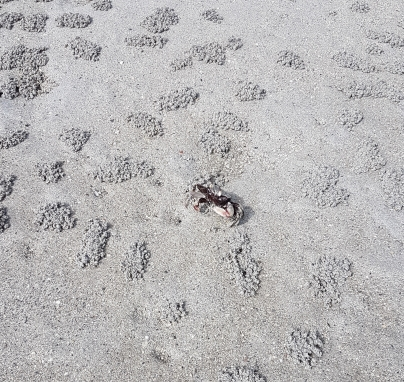 Gros crabe