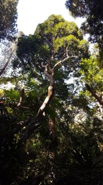 La taille de cet arbre...